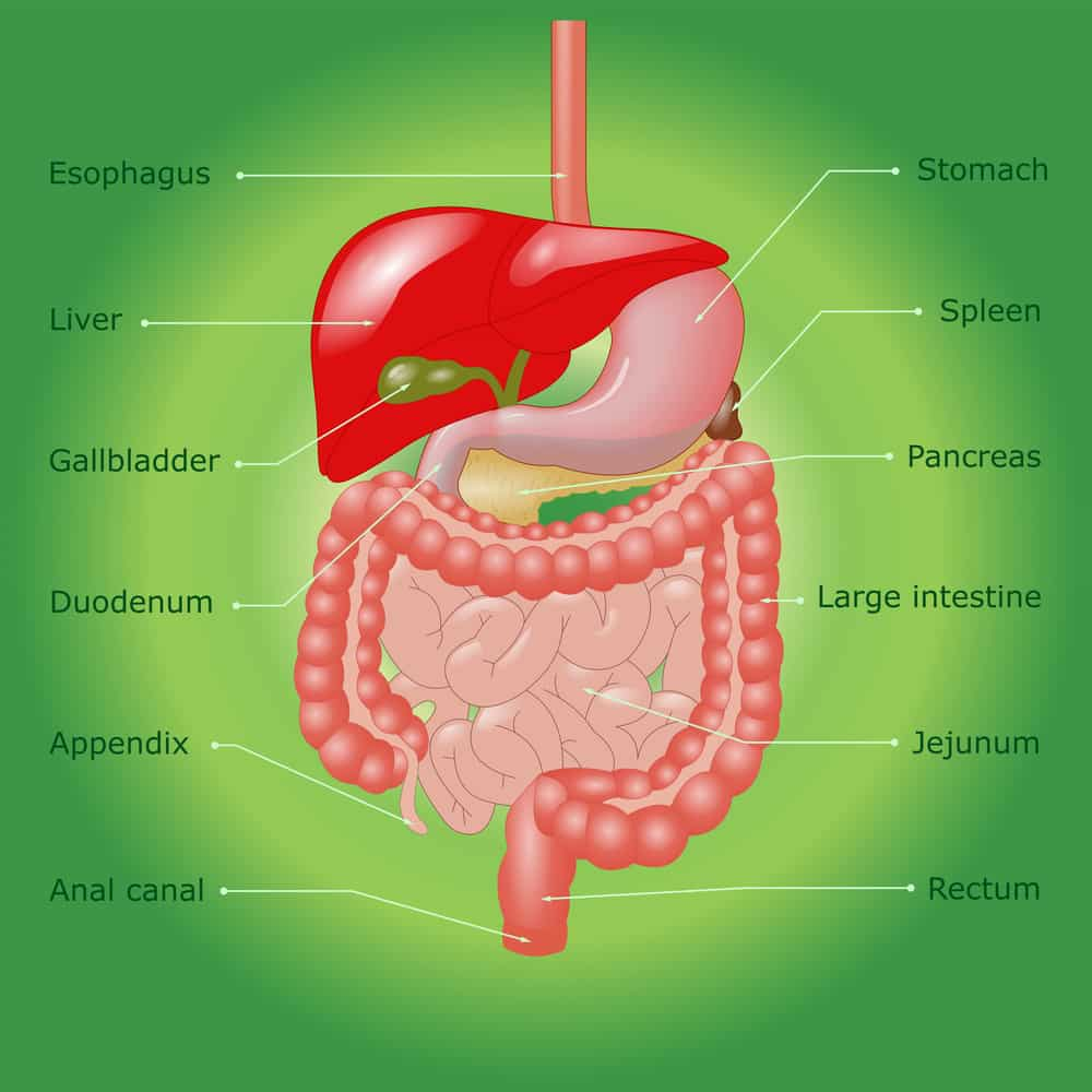Liver and Gallbladder: Signs, Symptoms, and Treatment